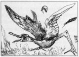 WOUNDED BIRD