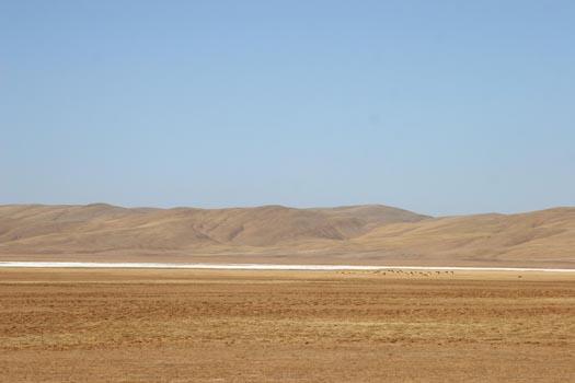 barrenlandscape