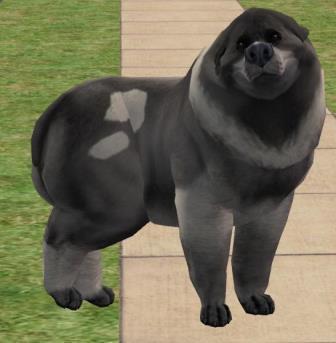 dogpig